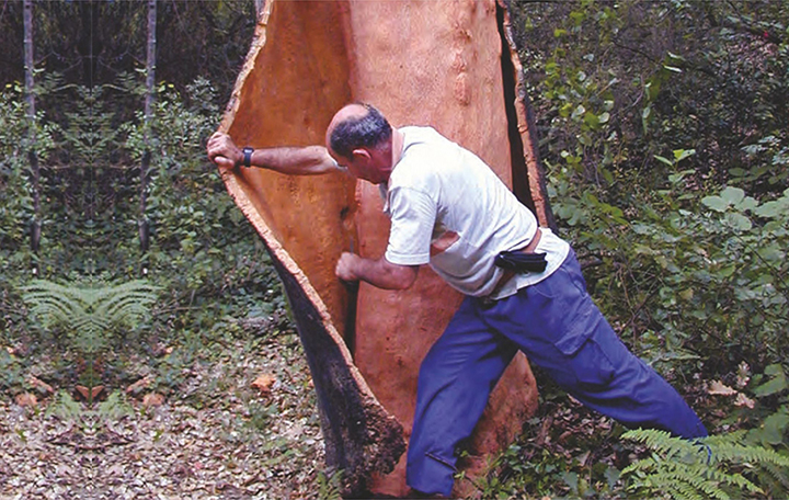 изображение как снимают кору с дерева